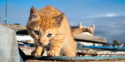 Blue Basics Cat Food Reviews | Healthy limited Ingredient Wet and Dry Food