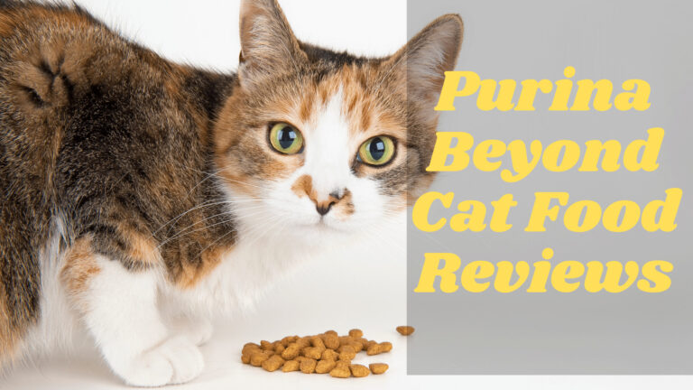 Latest 2020 Purina Beyond Cat Food Reviews   How to Choose Best For Your Friend