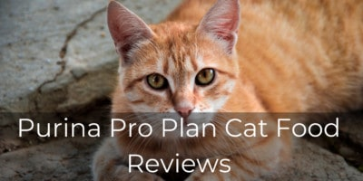 Purina Pro Plan Cat Food Reviews | Top 3 Pro Plan Analyzed and Benefits