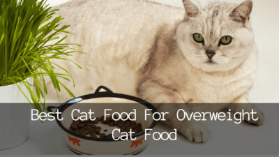 3 Best Cat Food For Overweight Cats 2021: Indoor Cats Weight Loss Guide | MyBestCatFood