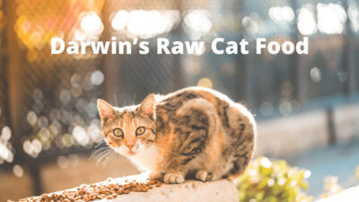 Top Darwin's Raw Cat Food and Reviews | Where You Buy Darwin's Pet Foods