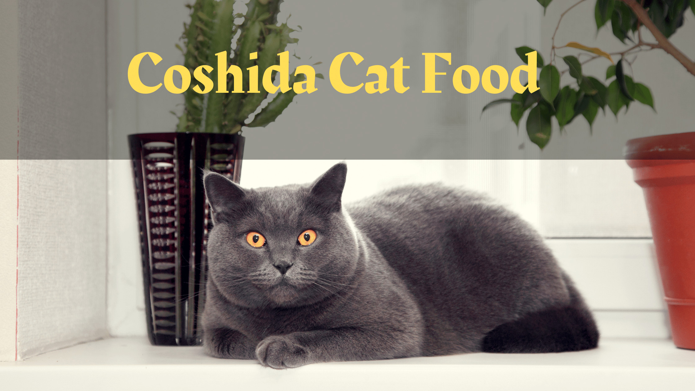 Coshida Cat Food Reviews | Coshida Dry and Wet Cat Food