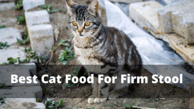 best cat food for firm stool