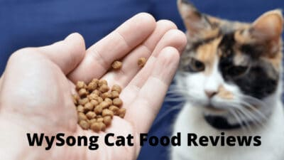 The Wysong Cat Food Reviews 2021 - MyBestCatFood