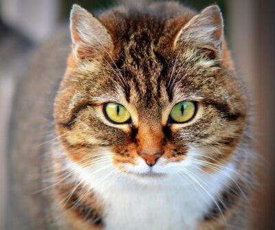 Farmina(N&D) Cat Food Review: Ingredients, Recall, Product Background and More