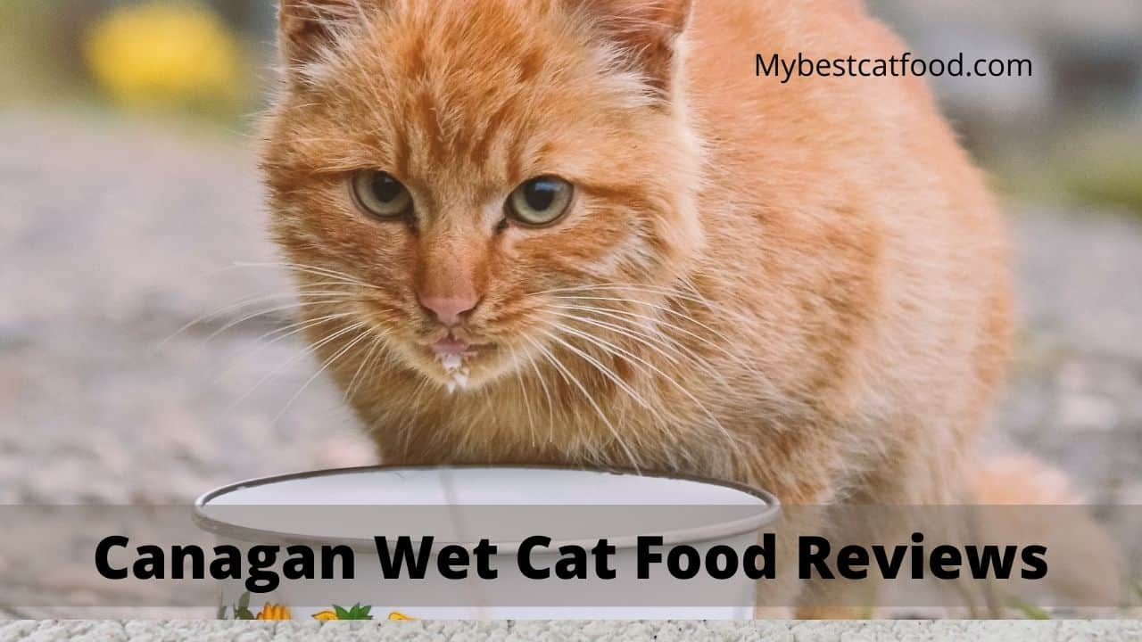Canagan wet cat food Reviews