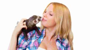 What Can Ferrets Eat | food for ferrets cats