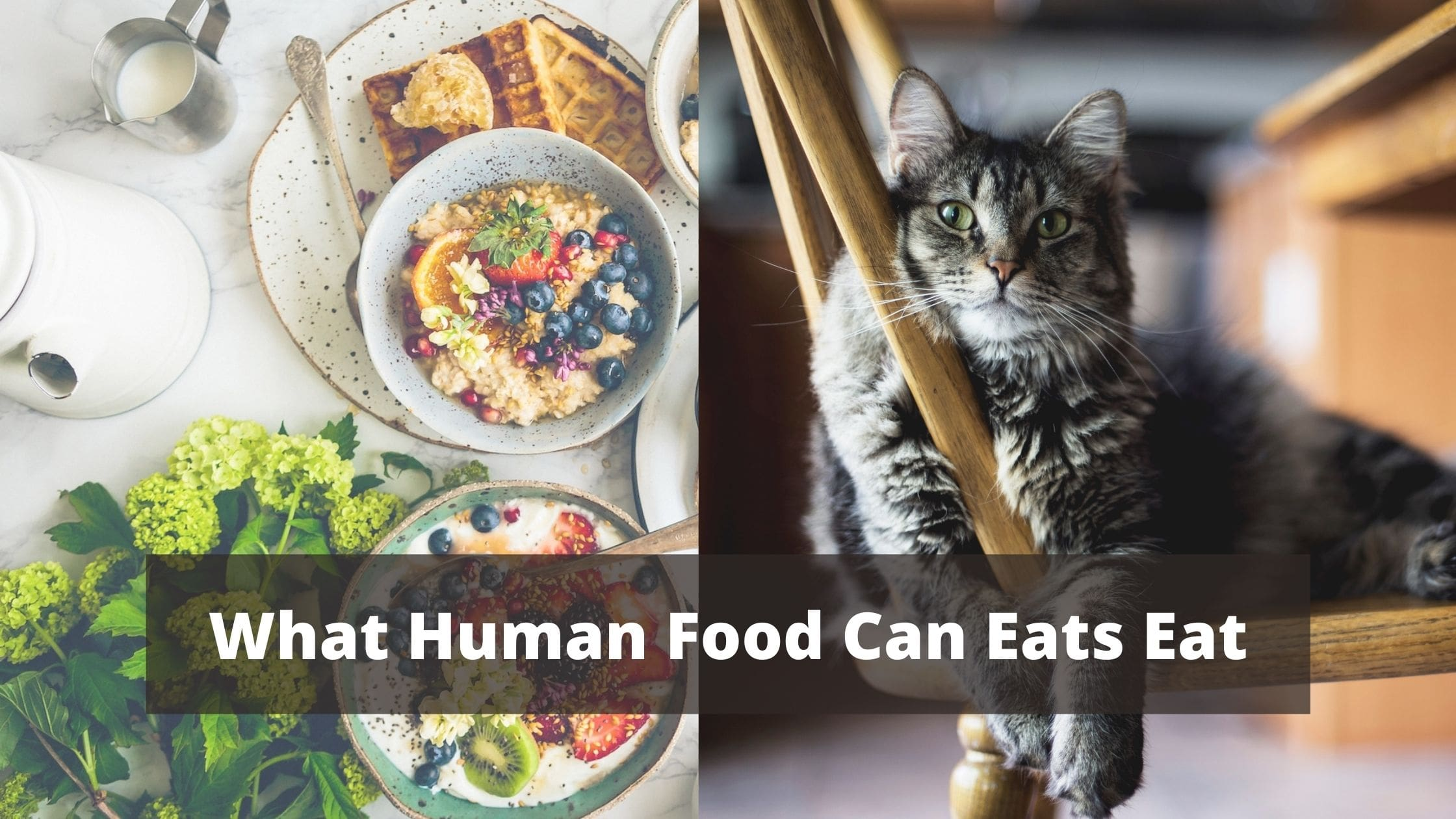 What Human Food Can Eats Eat