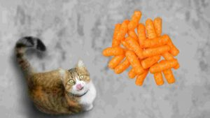 can cats eat cheetos