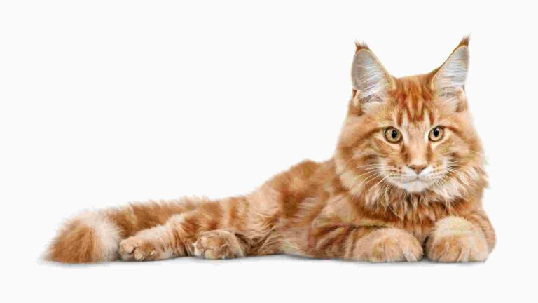 4 Best Quality Affordable Wet Cat Food Options 2021
