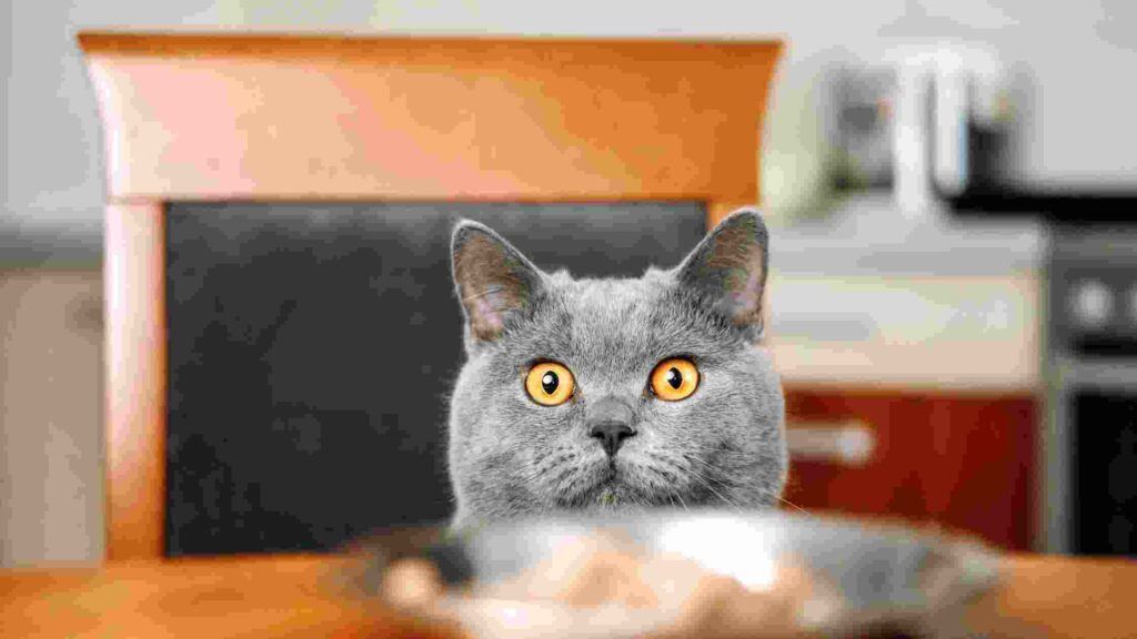 is blue buffalo good for cats