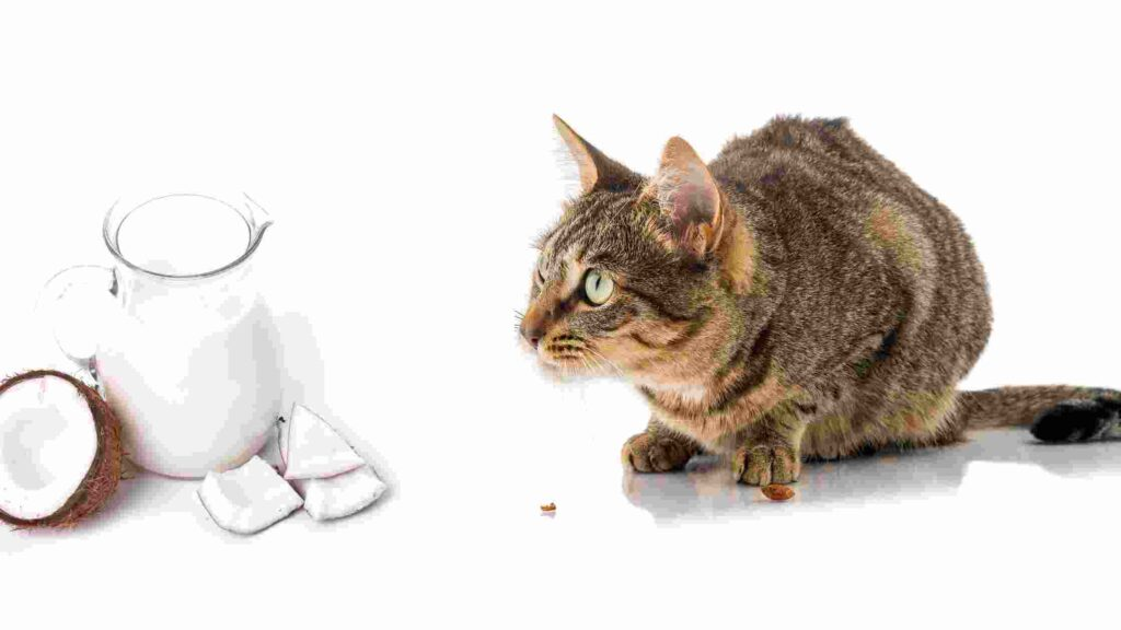 Can cats eat coconut milk