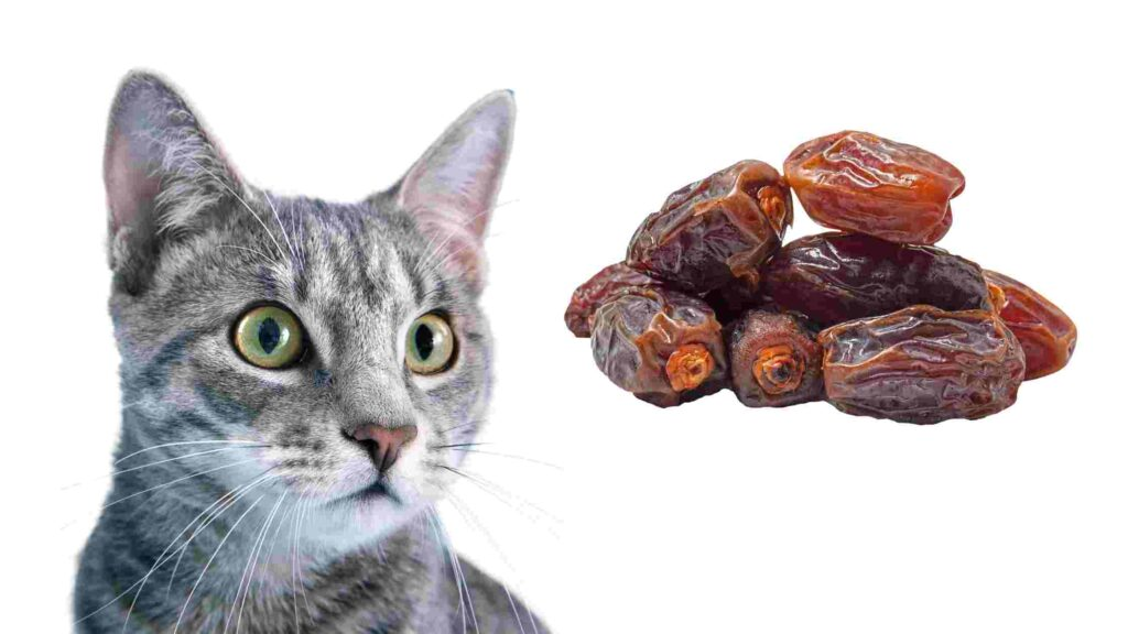 dates safe for cats