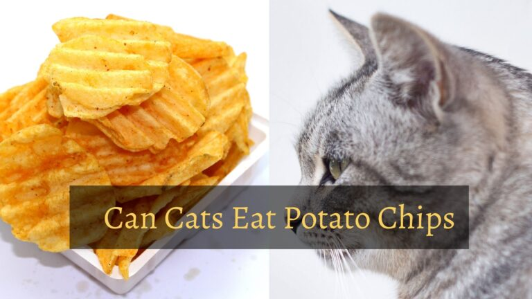 Can Cats Eat Potato Chips