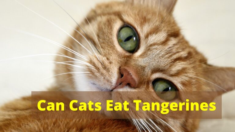 Can Cats Eat Tangerines