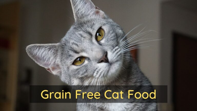 is grain free cat food bad for cats