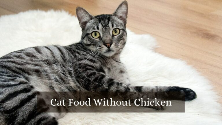 cat food without chicken