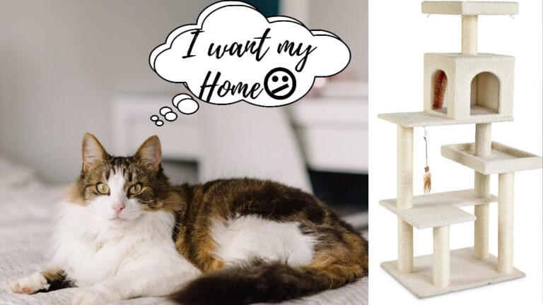 best cat tree for larger cats