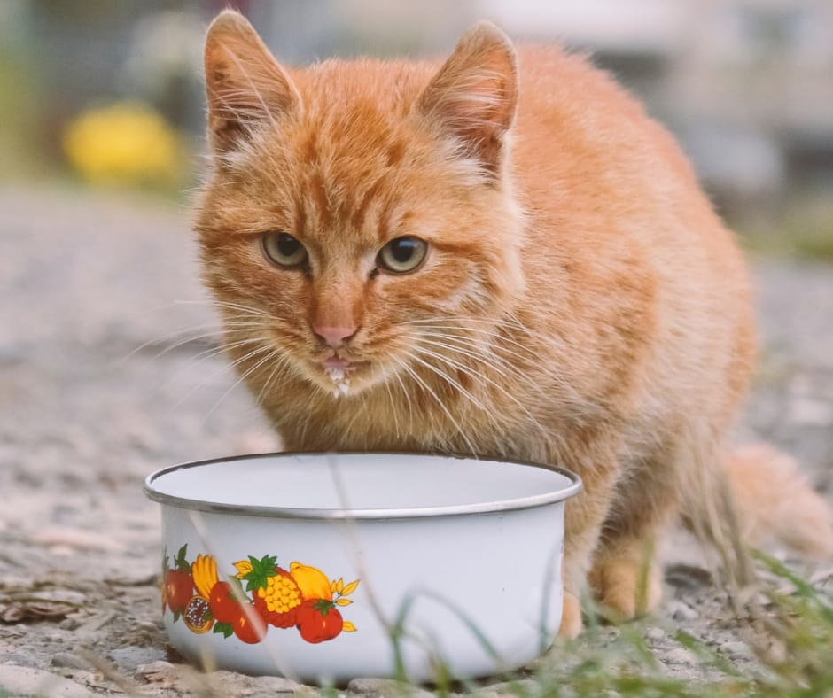 probalance cat food review