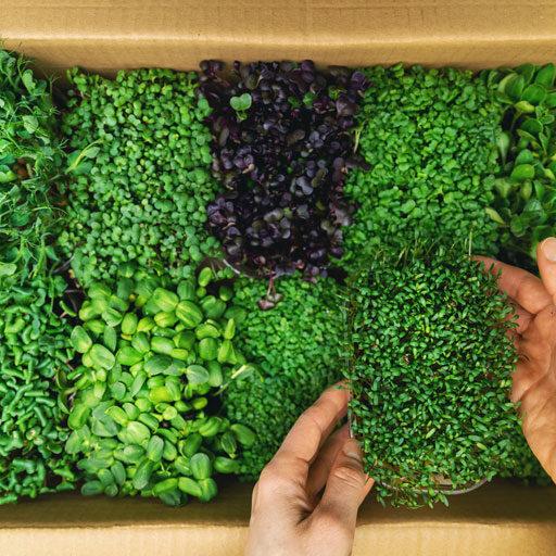 Organic-raw-food