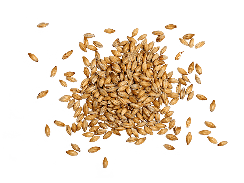 Pile of Raw Barley