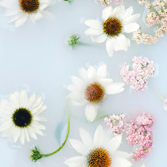 Image Nailed It Flower arranged in white liquid