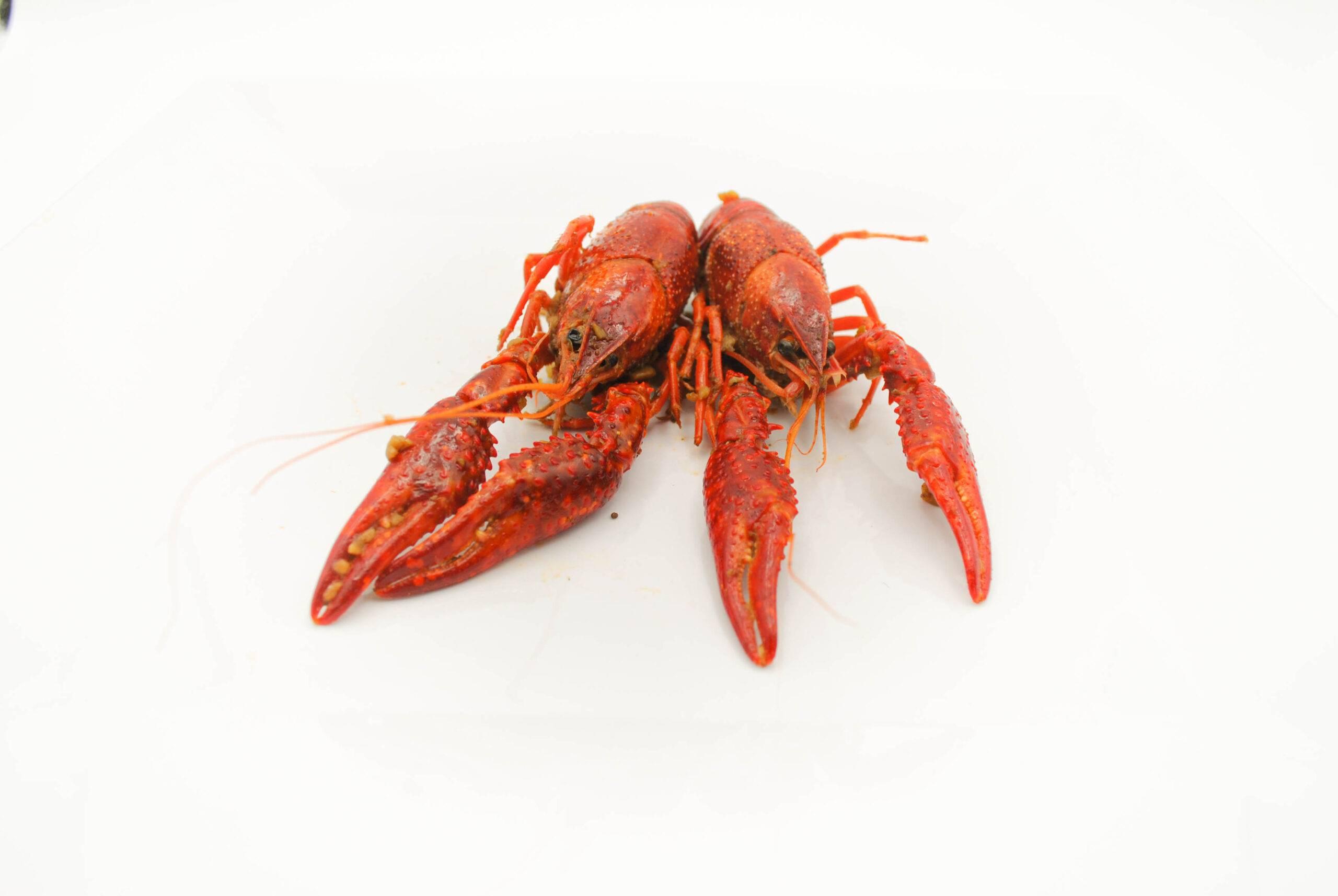 Cray for Crawfish!