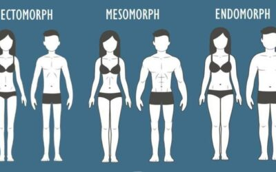 The Three Body Types, Explained