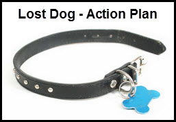 Lost Dog Action Plan