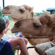 Wordless/Wordful Wednesday:  At The Zoo