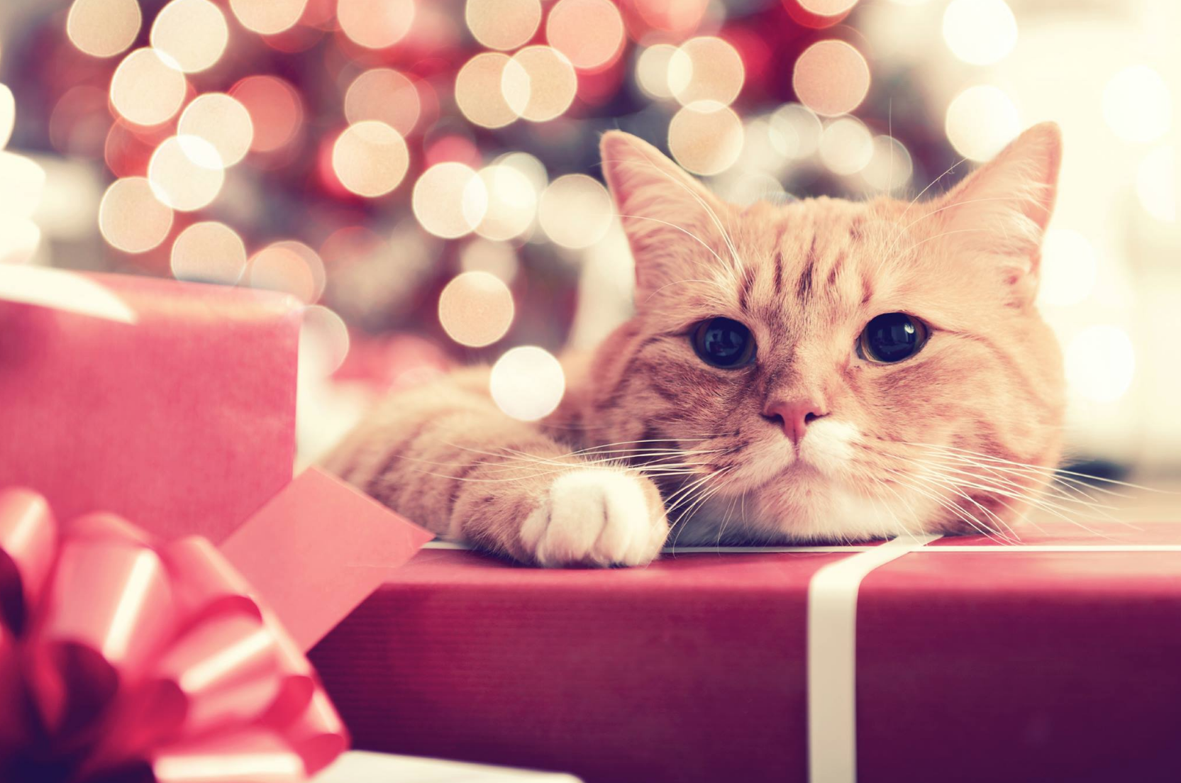 Tips for Holiday Pet safety