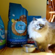 7 Easy Ways to Save at Target + Great Deals on Purina ONE Pet Food