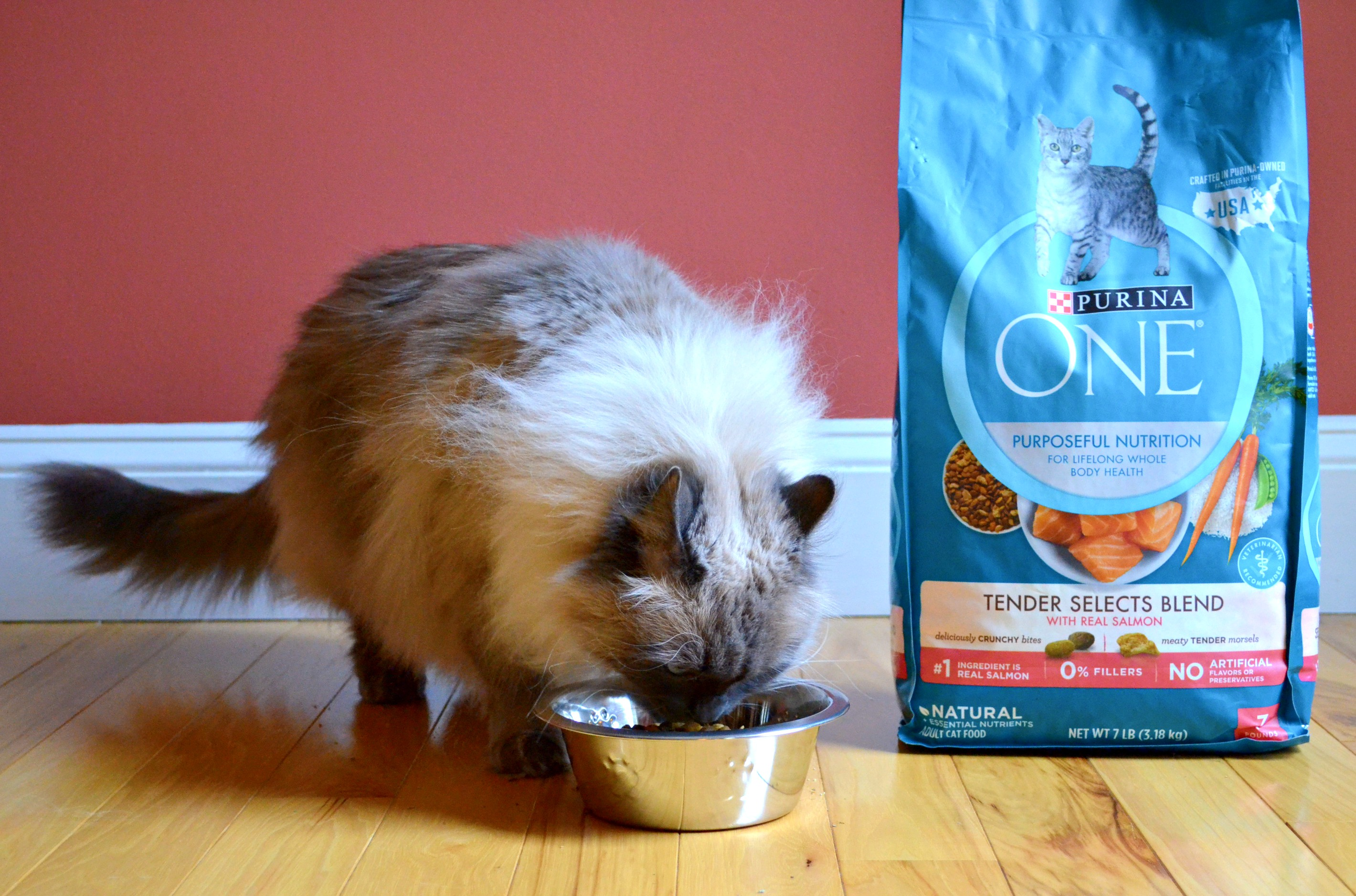 a cat eating Purina ONE dry cat food