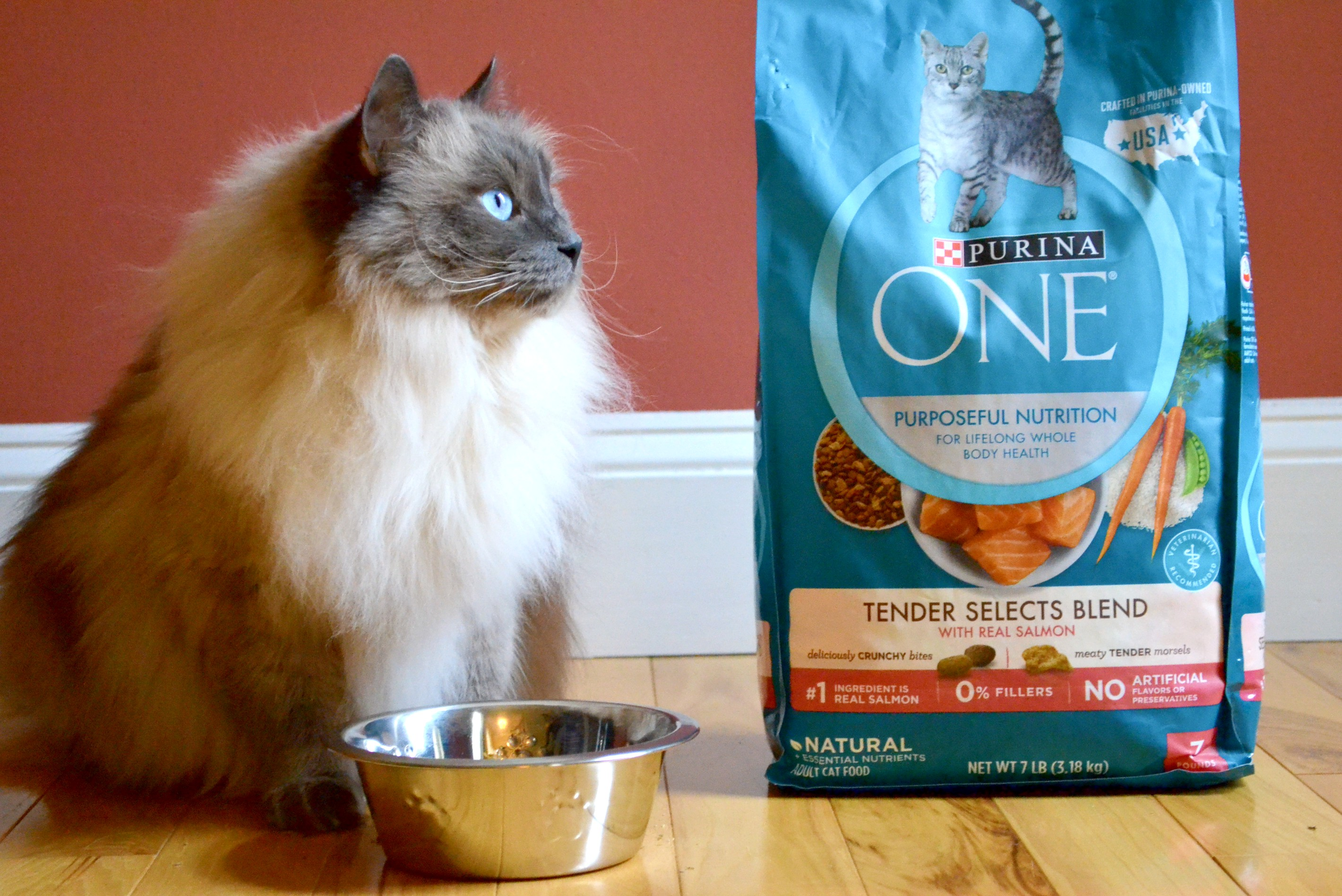 a cat enjoying cat food from Purina ONE