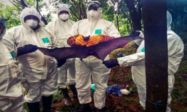 Saudi Arabia bans produce from Kerala fearing Nipah Virus Spread