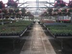 Hartman's Towne & Country Greenhouse
