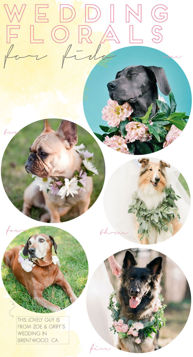 Wedding-Florals-for-Fido