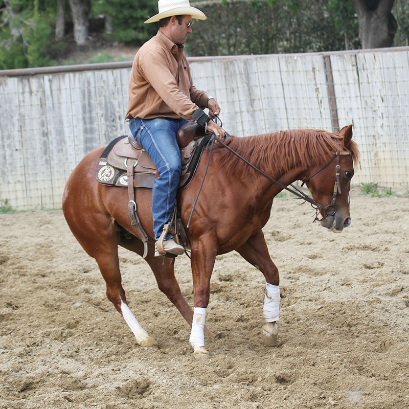Monty Roberts Western Horse Training Flag Is Up Farms