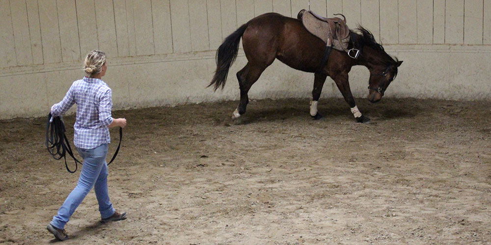Monty Roberts Advanced Course of Horsemanship
