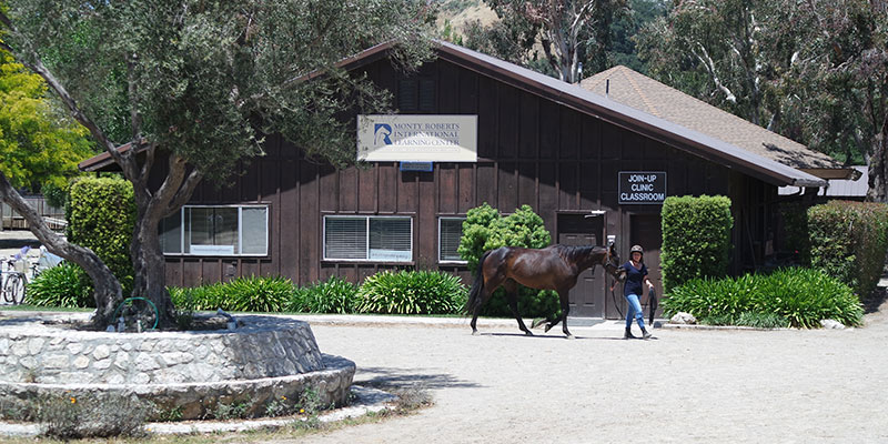 Horsemanship classes at Monty Roberts International Learning Center
