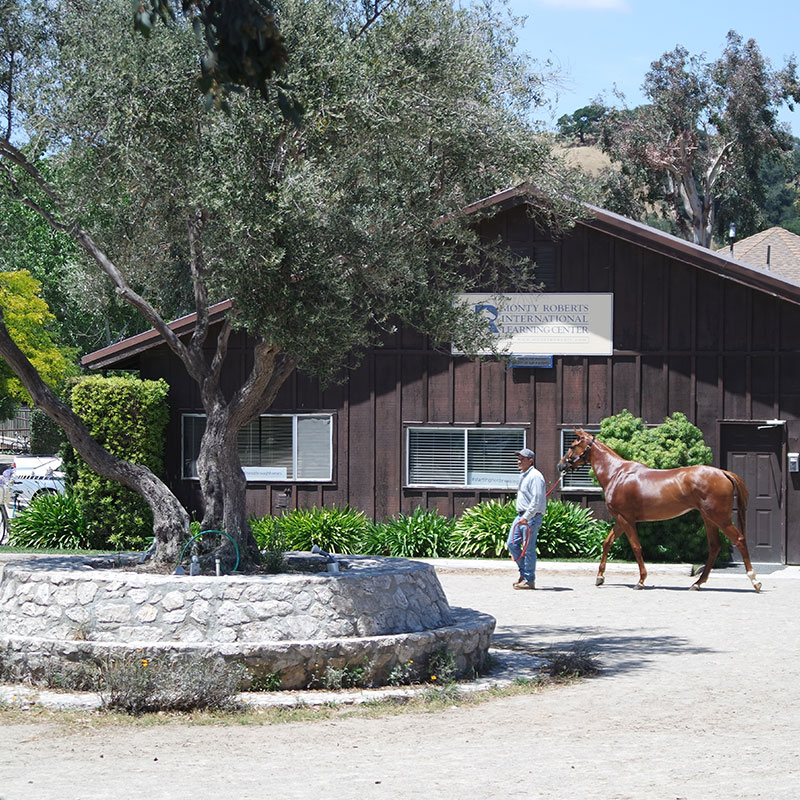 Monty Roberts Horse Sense and Healing with Veterans