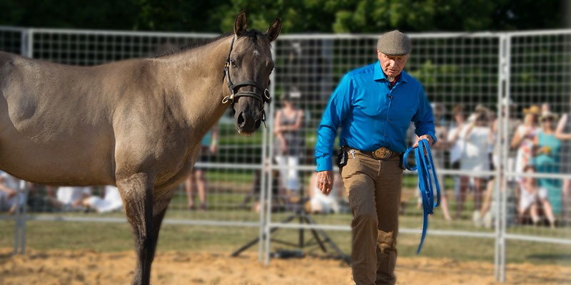 Online Lessons - Monty Roberts Online University