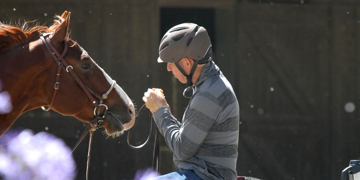 horse reaching to take food - hand feeding causes biting