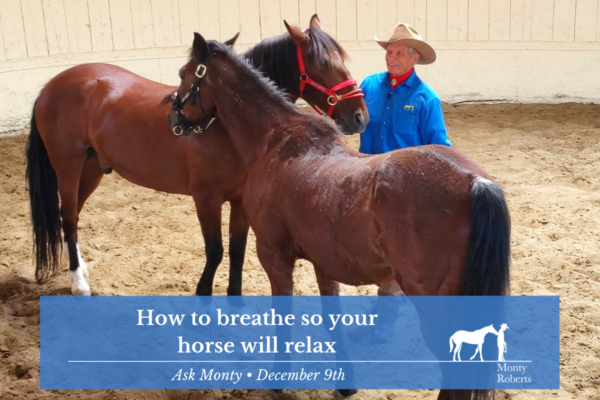 Ask Monty - how to breathe so your horse will relax