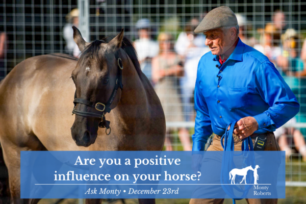 Ask Monty: Are you a positive influence on your horse?