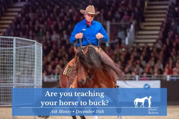 Ask Monty: Are you teaching your horse to buck?