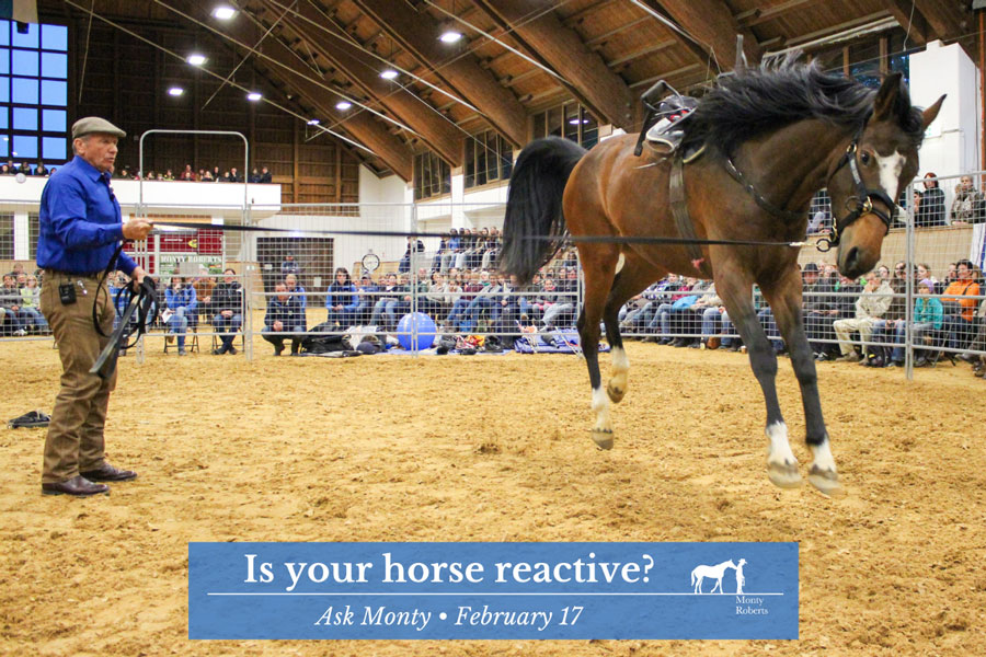 Ask Monty - Is your horse reactive