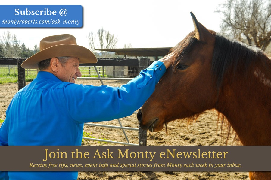 Ask Monty - free horse training tips online