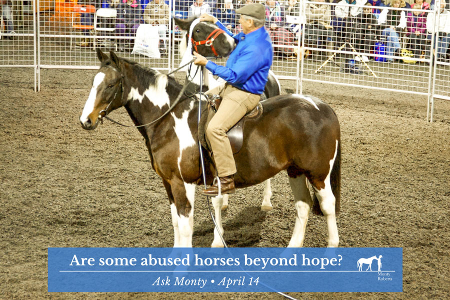 Ask Monty - Are some abused horses beyond hope?