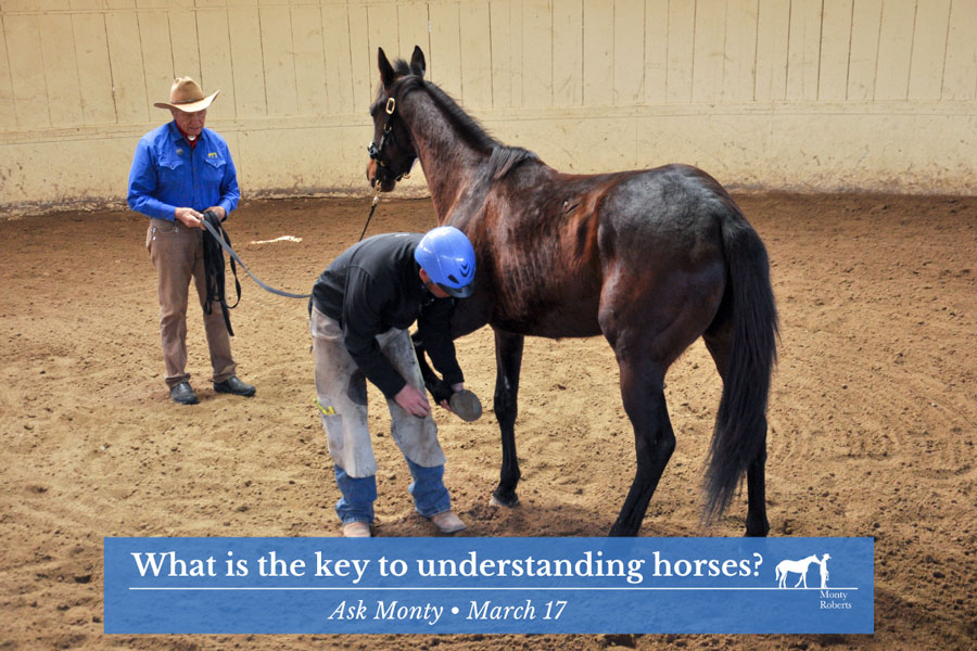 Ask Monty - What is the key to understanding horses